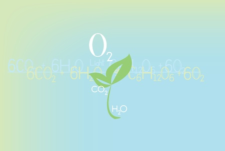 Plant life producing oxygen, equation of photosynthesis