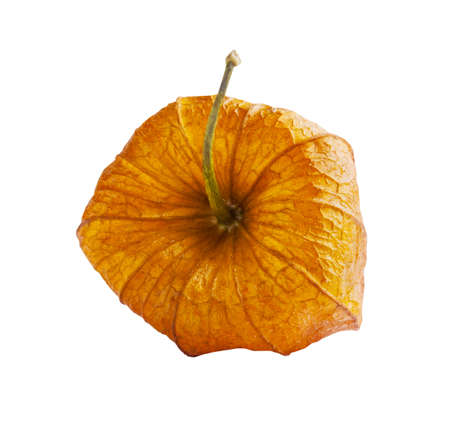 alkekengi: Orange physalis isolated on a white background