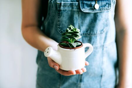 Young woman holds a pot with little succulents against a white wall in her house. 写真素材