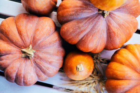 Fresh pumpkins on white wooden background. Autumn is coming. Banco de Imagens