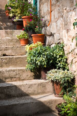Green flowers in clay pots on stairs in old town of Kotor city in Montenegro. 版權商用圖片