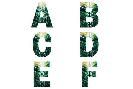 Wicker font Alphabet a, b, c, d, e, f made of fresh green palm leaves with sunlight.