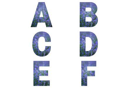 Lavender font Alphabet a, b, c, d, e, f made of violet lavender field.