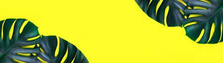 Banner made from tropical jungle monstera leaves isolated on bright yellow background. Flat lay style. Stock fotó