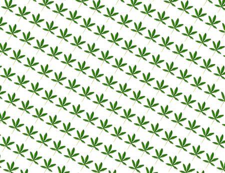 Hemp leaf isolated on white background. Flat lay style.