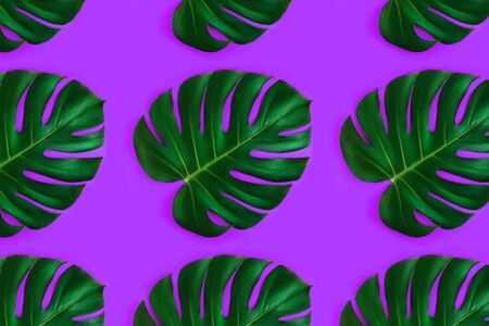Pattern made from monstera leaf isolated on purple background. Flat lay style.