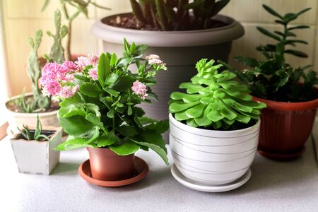 Kitchen wooden shelves for home plants against beige wall.