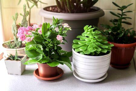Kitchen wooden shelves for home plants against beige wall. Imagens - 148271147
