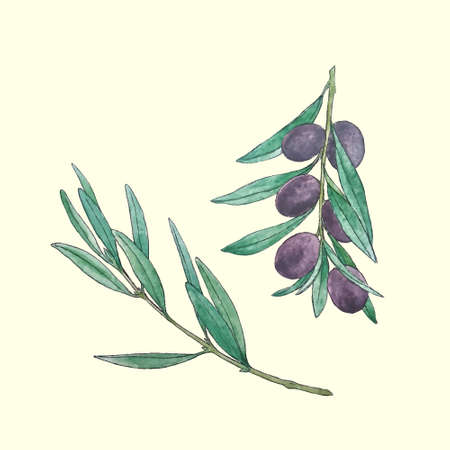 food industry: illustration of olive branches painted by hand in watercolor. Beautiful design element, perfect for any business related to the food industry.