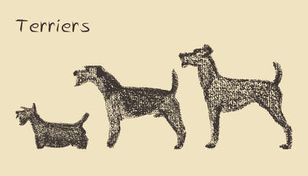 Vector illustration of three hand drawn terrier dogs. Hand drawn with chalk.