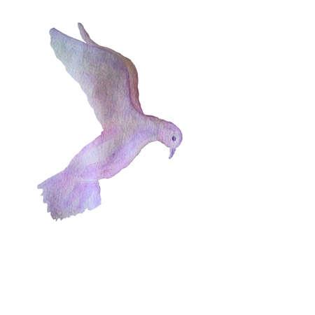 bird illustration: Vector card with hand painted watercolor pigeon flying in the sky