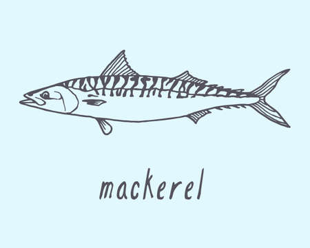 Vector illustration of hand drawn mackerel fish. Advertising, menu or packaging cool design elements.