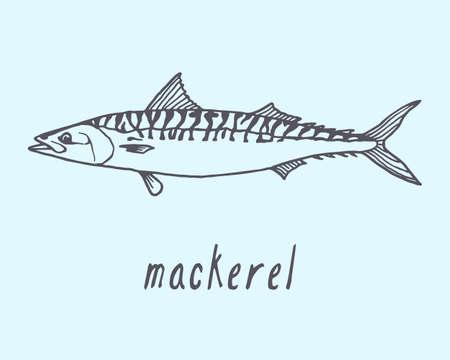 mackerel: Vector illustration of hand drawn mackerel fish. Advertising, menu or packaging cool design elements.