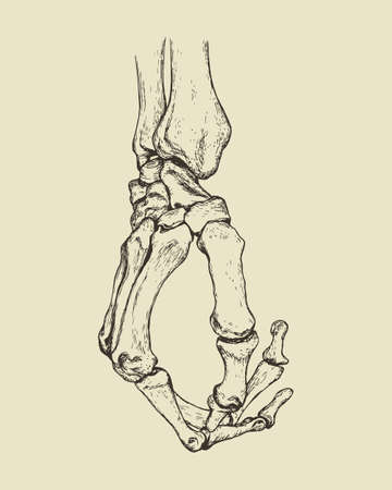 Vector illustration of hand drawn hand skeleton. Anatomical or medical illustration. Иллюстрация