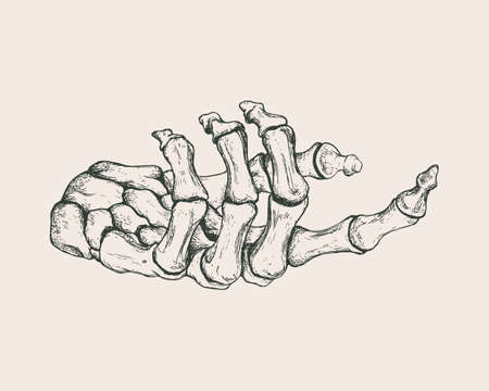 Vector vintage illustration of hand drawn hand skeleton. Anatomical or medical illustration.