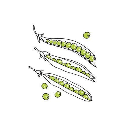 green pea: Illustration of hand drawn green pea pods. Vegetarian, healthy food illustration. Beautiful design elements.