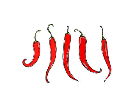 peppers: Vector illustration of hand drawn hot chili peppers.