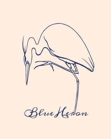 blue heron: Vector illustration of hand drawn hunting blue heron. Beautiful ink drawing