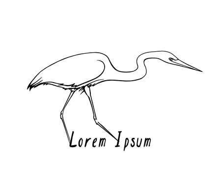 blue heron: Vector illustration of hand drawn walking heron. Beautiful ink drawing