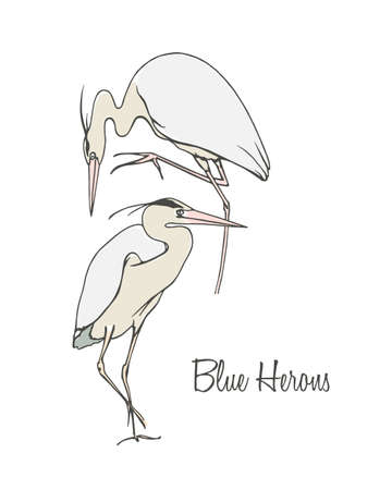 blue heron: Vector illustration of hand drawn blue herons. Beautiful ink drawing