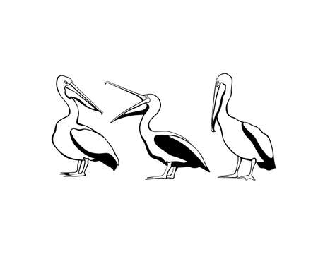 beach side: Vector card with cute pelicans made in black-and-white style. Sweet pelican characters, beautiful design elements.