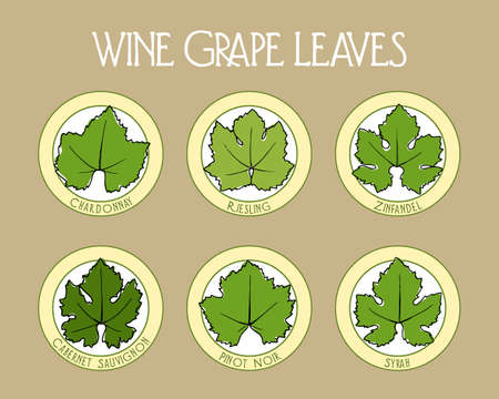 cabernet sauvignon: Vector collection of wine grape leaves badges. Hand drawn Riesling, Chardonnay, Syrah, Zinfandel, Cabernet Sauvignon and Pinot Noir grape leaves shapes on round layouts.