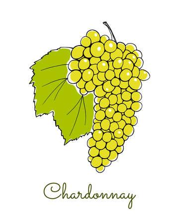 Vector illustration of hand drawn Chardonnay vine with leaf. Beautiful design elements.
