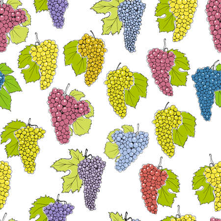 species of creeper: Vector seamless pattern with hand drawn grapes with leaves. Beautiful design elements, perfect for prints and patterns. Illustration