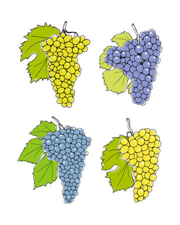 wine grapes: Vector illustration of hand drawn wine grapes with leaves. Beautiful design elements. Illustration