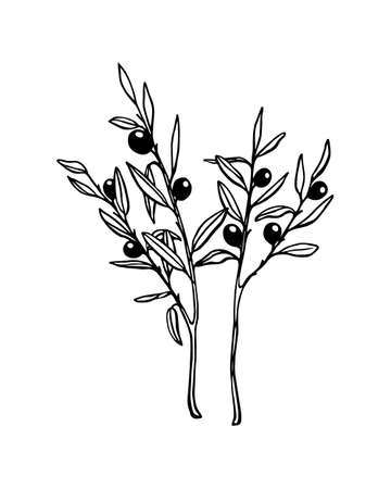 ex: Hand drawn olive branches. Beautiful ink drawing.