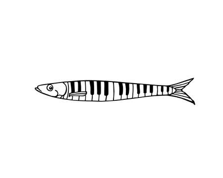 sardine: Vector illustration of hand drawn sardine patterned in piano keys. Advertising, menu or packaging cool design elements.