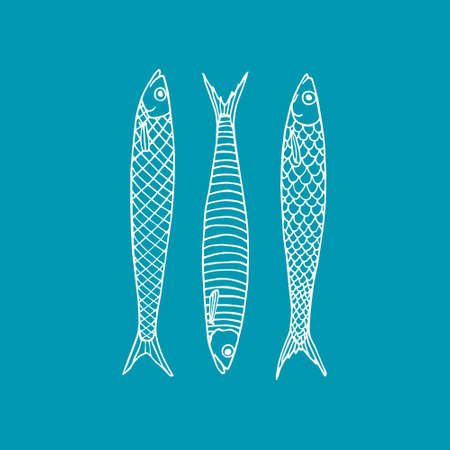 salt water: Vector illustration of hand drawn sardines. Advertising, menu or packaging cool design elements.