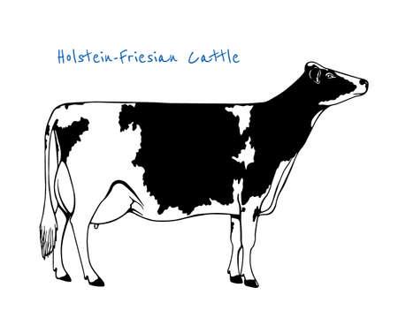 Ilustración vectorial de dibujado a mano de ganado Holstein-Friesian. dibujo de la tinta de la hermosa vaca lechera. Foto de archivo - 59253671