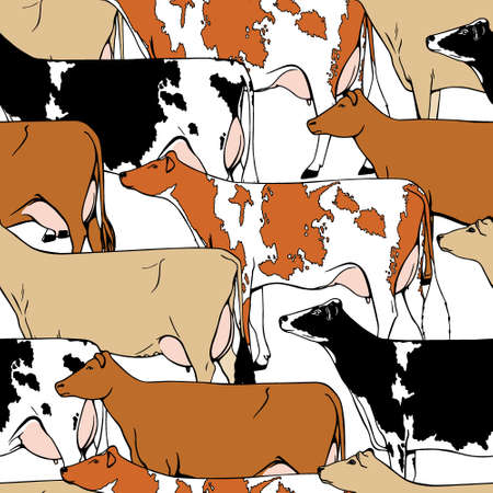 ink drawing: Vector seamless pattern with hand drawn dairy cattle breeds.  Beautiful ink drawing of dairy cows.