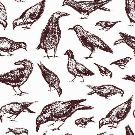 beautiful eating: seamless pattern with hand drawn eating city birds. Beautiful chalk drawing, perfect for prints and patterns Illustration