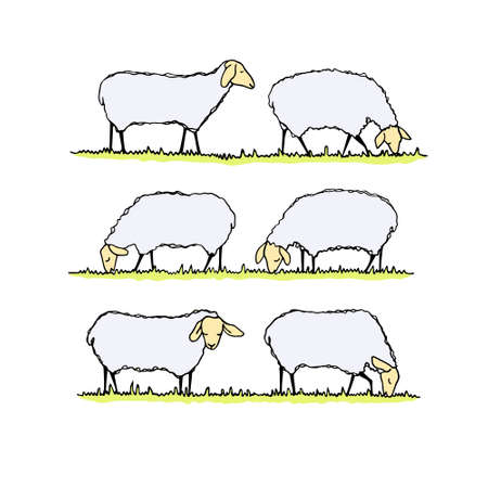 beautiful eating: Vector illustration of hand drawn sheep herd eating fresh grass on a meadow. Beautiful design elements, cute animal characters.