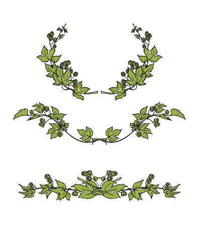 Vector set of hand drawn hop laurel and borders. Graceful garland of hop branch with leaves and cones. Romantic floral design elements. Illustration