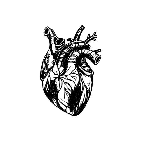 Vector Illustration Of Human Heart. Anatomy Drawing Made In Graphic ...