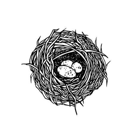 straw twig: Vector illustration of hand drawn nest with spotted eggs. Graphic style, beautiful illustration