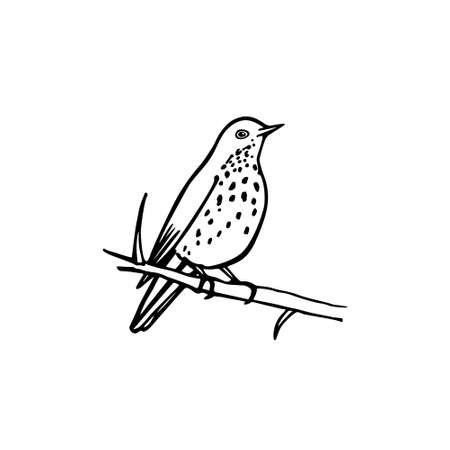 Vector illustration of hand drawn North America bird sitting on a branch. Ink drawing, graphic style. Ilustracja