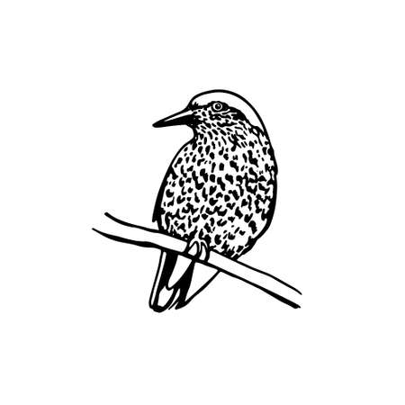 motley: Vector illustration of hand drawn motley bird sitting on a branch. Ink drawing, graphic style.