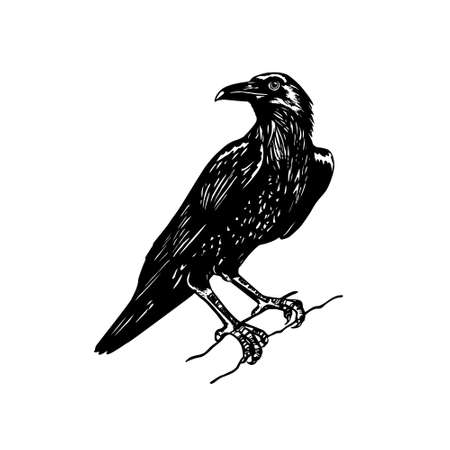 bough: Vector illustration of hand drawn raven sitting on a tree bough. Ink drawing, graphic style.