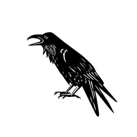 ornithology: Vector illustration of hand drawn raven with open beak. Ink drawing, graphic style.