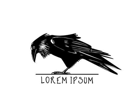 looking down: Vector illustration of hand drawn raven looking down. Ink drawing, graphic style.