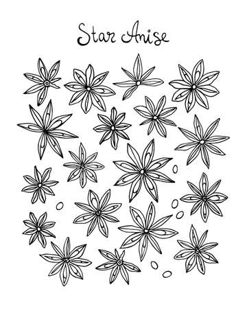 anise: Vector illustration of with hand drawn star anise. Beautiful food design elements, perfect for any business related to the food industry.