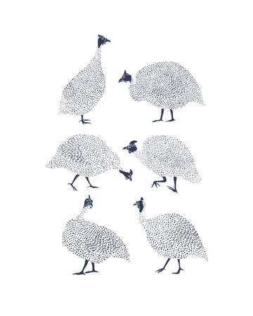 Guinea fowls illustration