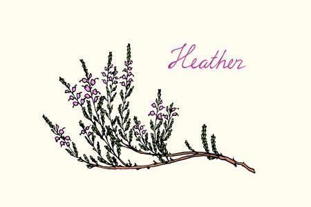 heath: Hand drawn heather