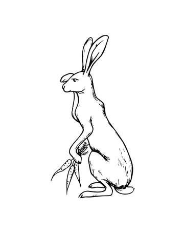 rabbit standing: Hand drawn hare