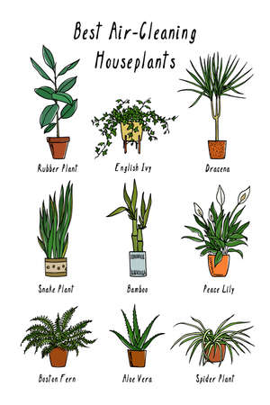Hand drawn houseplants 向量圖像