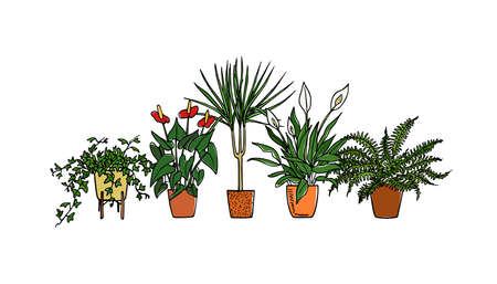手描きの観葉植物